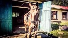 Konie. Wakacje na stajni