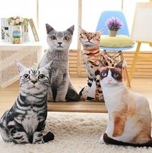 Koty jak żywe :) Kto chciałby taką poduszkę?