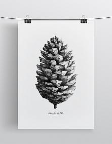 Szyszka | 70 x 100