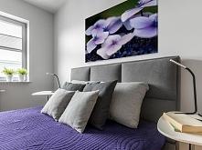 Purpurowa hortensja - fotoobraz do sypialni