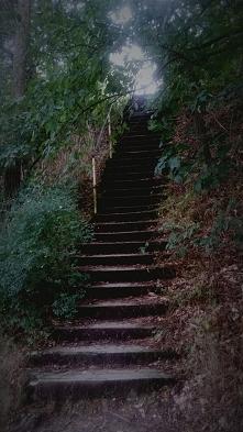 Spacerując po lesie znalazłam takie schody. Macie jakieś porady na temat foto...