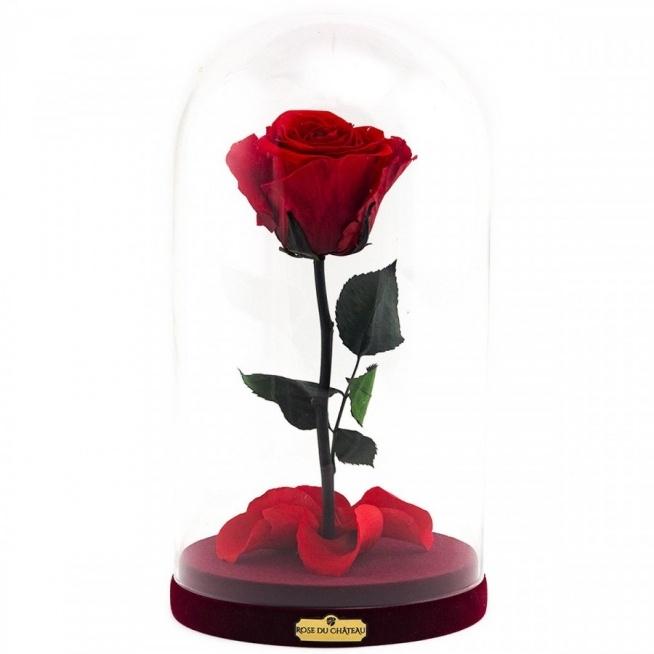 Rose du chateau. Prawdziwa róża, która nie zmieni wglądu przez 2 lata.
