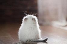 Nie, nie, z pewnością to nie jest mysz. A może jednak...? ;)