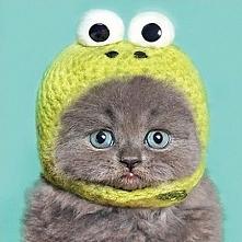 Jaki kotek??? To na mur jest żabka :))