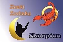 SKORPION – ZNAK ZODIAKU (23...