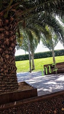 Odpoczynek pod palmami...usiądź ze Mną i posłuchaj wszechświata; )