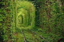 Tunel miłości,Ukraina-W ciepłych miesiącach posadzone jedno obok drugiego drz...