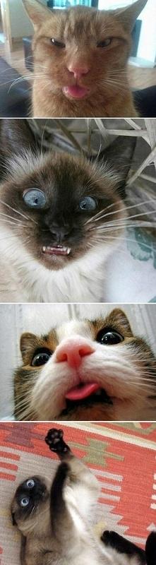 Co robi kot, gdy się odwrócisz :))