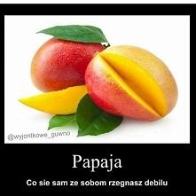 papaja xd
