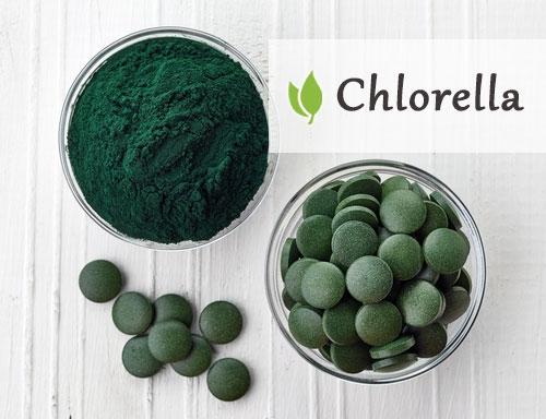 Chlorella - właściwości i opinie na temat tej algi