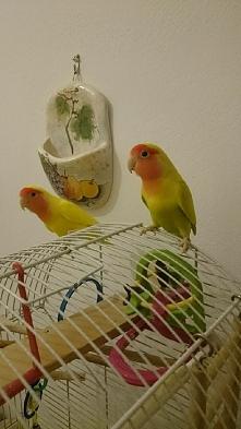 Kolorowo w domu. Ptaszyny.