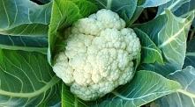 Kalafior - smaczny i zdrowy