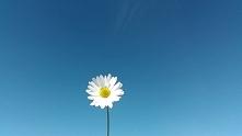 Kwiatek ;)