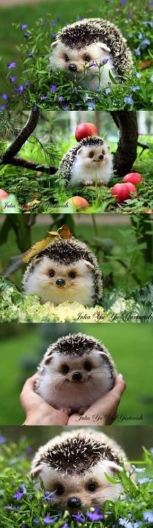 Uśmiechnięty jeżyk :)