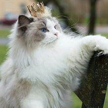 Princess ❤❤❤