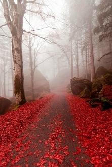 Pięknie *.* taka jesień może być :