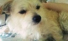 Dzień dobry wszystkim jestem Didi :) ❤