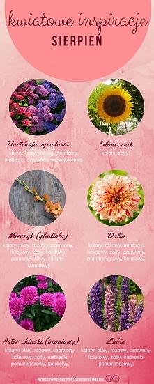 kwiaty kwitnące w sierpniu,...
