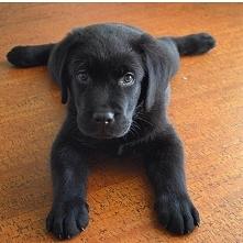 śliczności ❤️#dogs