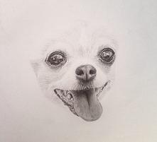 Jeszcze trochę pracy mnie czeka :D Rysunek mojego psa:)