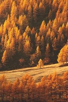 Piękna jesień, za takie wid...