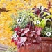 Fantastic Fall Container Ga...
