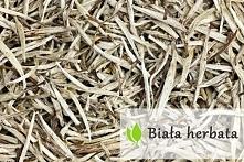 Biała herbata - właściwości i zastosowanie