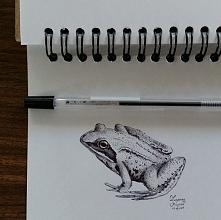 Żaba, z natury, długopis w szkicowniku.  (Ig/zmrusialek fb/zuzarysowana)