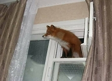Firefox znalazł lukę w  zabezpieczeniach Windows :)