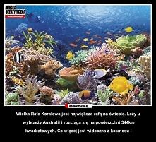 Wielka rafa koralowa,Australia