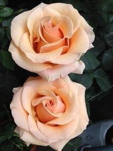 beauty ;>