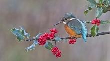 Pięknie się przedstawia ta ptaszyna (zimorodek) na pc :) Polecam :*