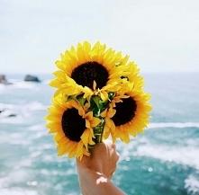 Słoneczniki takie piękne *.*
