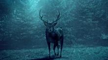 Hannibal *-*