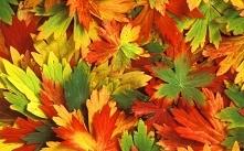 Tak naprawdę  sposobów  na spędzenie jesiennego wieczoru jest tyle, ile odcieni jesiennych liści...a każdy  z nich, zawsze jest tym najlepszym ❤