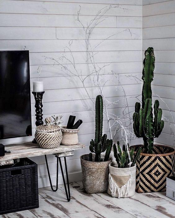 Kaktuski :)