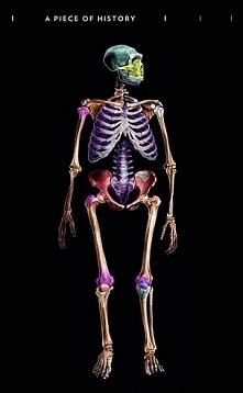 czas powrócić troszkę do anatomii :D