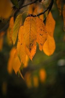 . . . jesień . . .