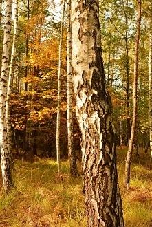 Jesień ;)