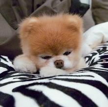 Śpimy ♡ :D