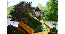 Ogród ziołowy: jak uprawiać?