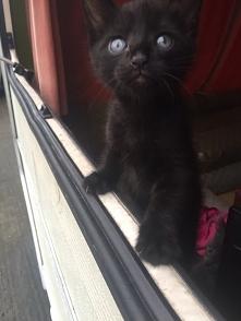 kiedy wracam to kotełek mnie przywita :) :3