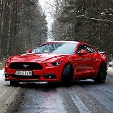 Mustang RedRace