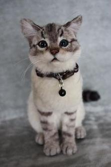Ale tyś piękny, koteczku! :-)