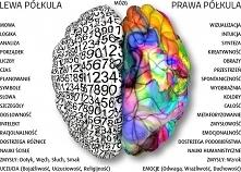 Za co odpowiedzialne półkule mózgu