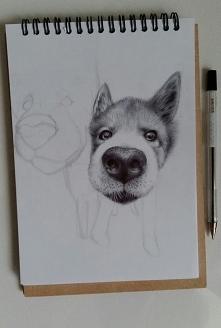 Niedługo narysuję drugi pyszczek... FB/zuzarysowana Ig: @suzanne.musial