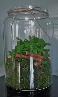 zioła w słoiku - ogród w słoiku