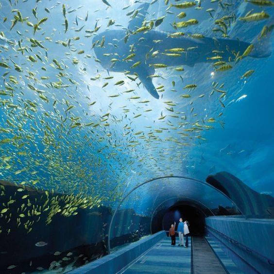 Georgia Aquarium, największe akwarium na świecie