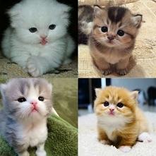 Kto jest pięknym kotem? Jestem(1.2.3.4)