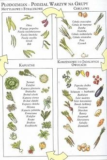 Warzywa 3